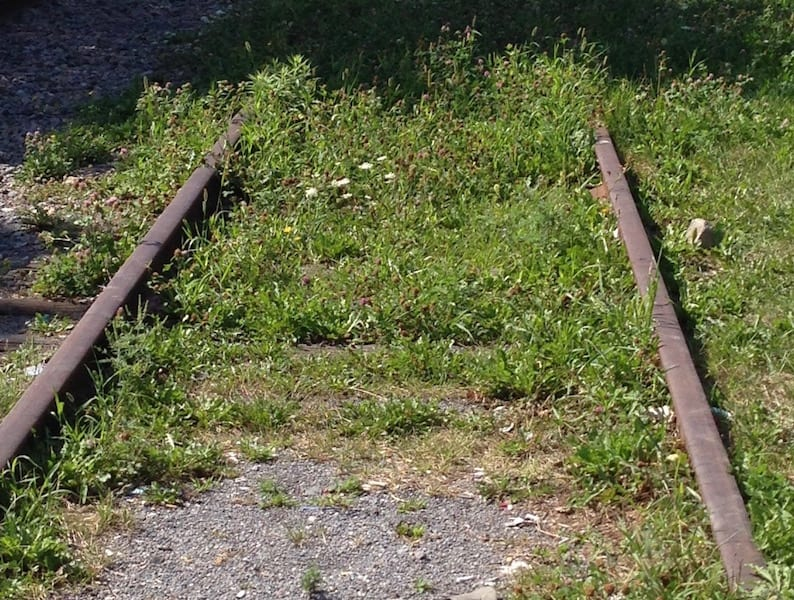 Train tracks lead into grass.