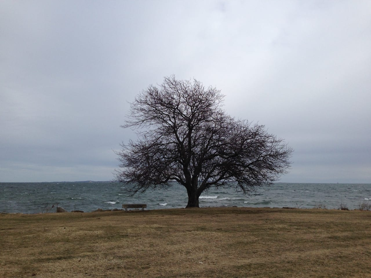 A lone tree by the shore at Harkness Memorial State Park