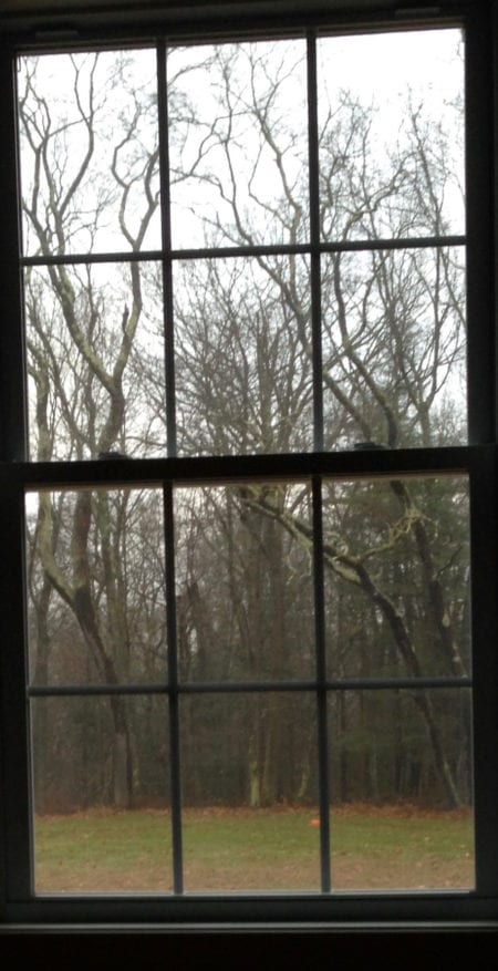 window view of leafless trees