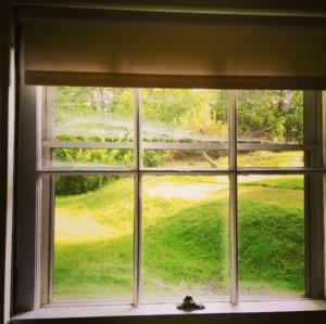 Window with spider webs.